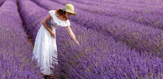 banner-lavendar